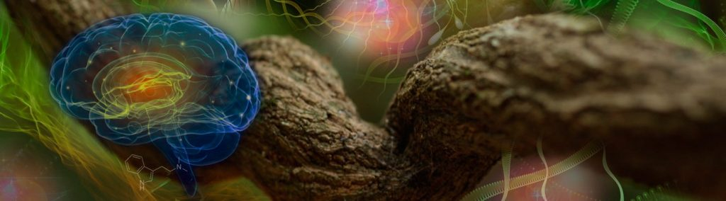 Ayahuasca vine brain