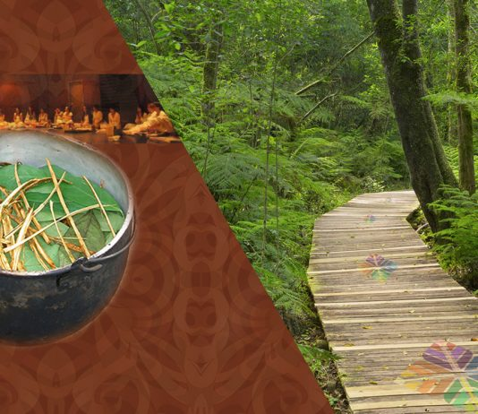 What-is-ayahuasca