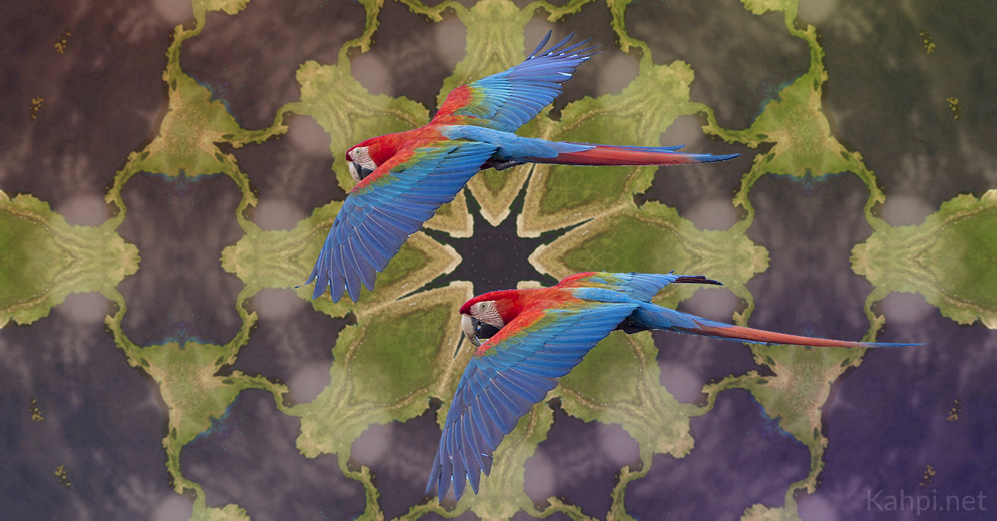 ayahuasca-doctor-bird