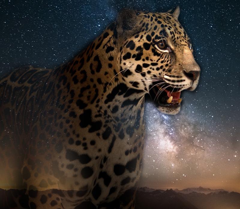 jaguar-shaman
