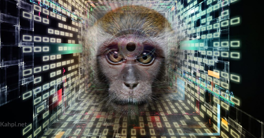 monkey-psychedelic-animal-dmt