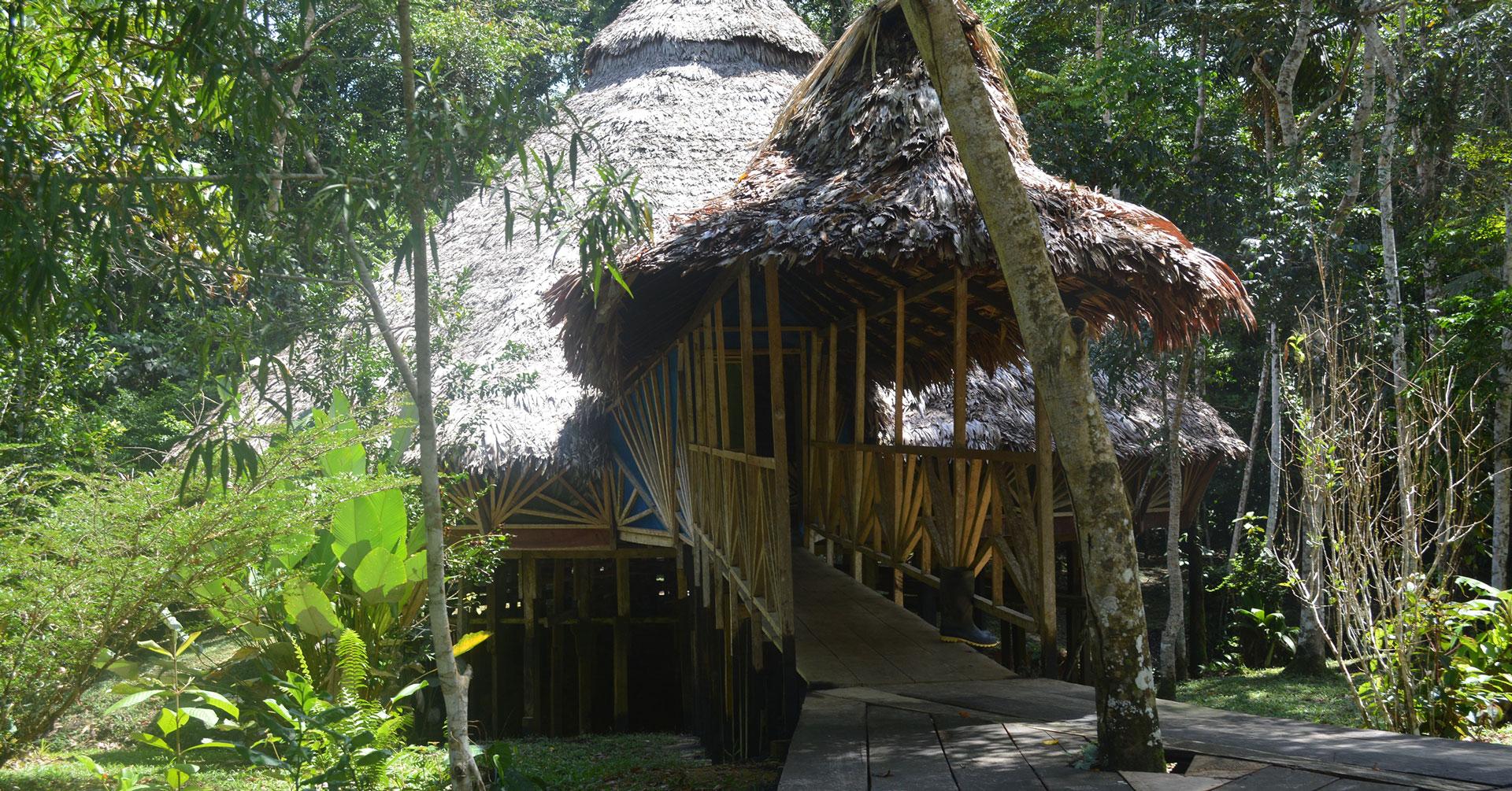 Image result for Ayahuasca Retreat