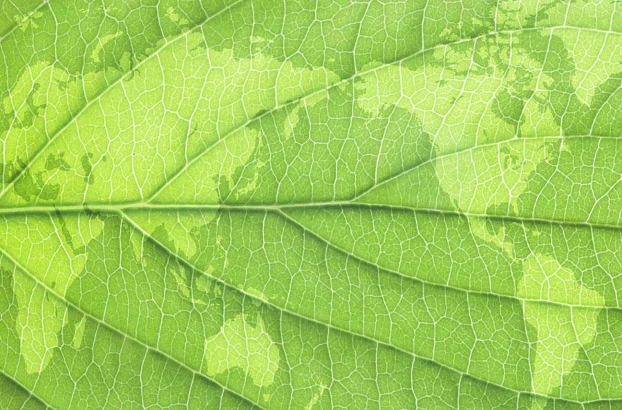 ayahuasca-leaf-world