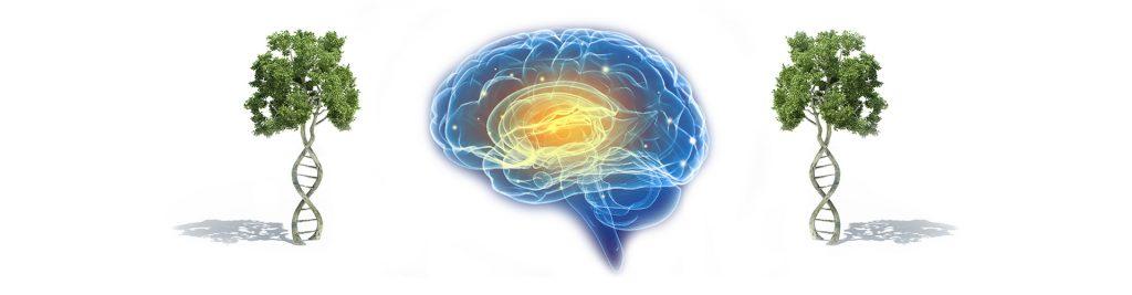 ayahuasca-brain