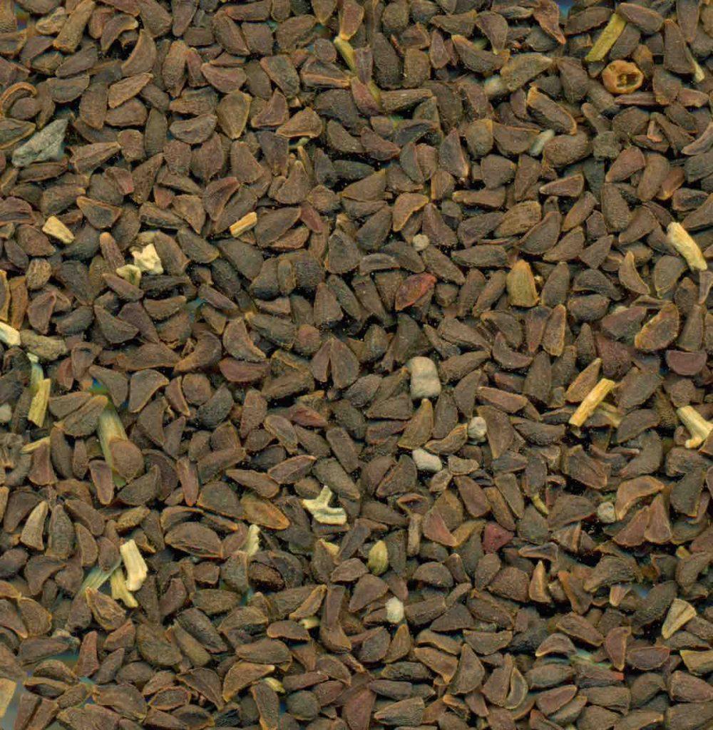 syrian rue or peganum harmala seeds