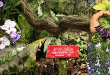 Translating Ayahuasca Shamanism and Western Medicine