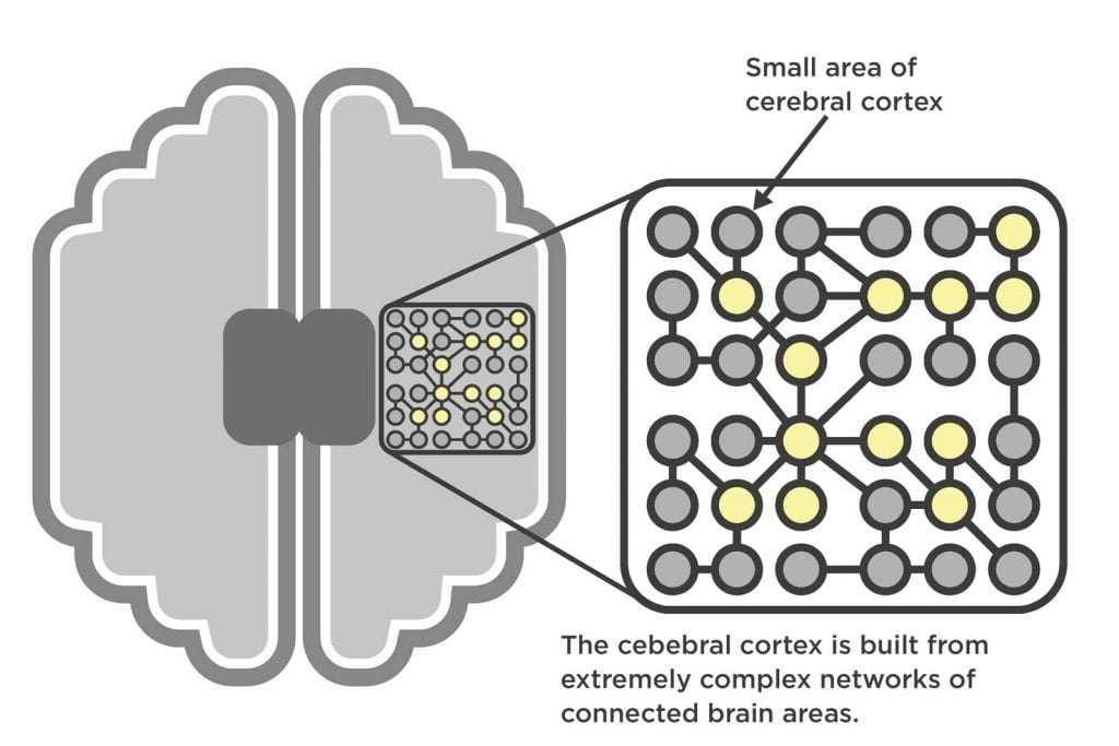 Diagram of a small area of the brain made up of complex interconnected neural networks.