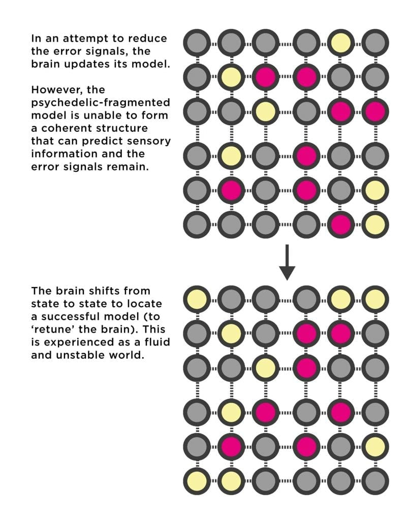 Diagram of the brain unsuccessfully trying to update its model so it matches the novel patterns of information. DMT in the brain makes it impossible to find a match between what is seen and what is known.